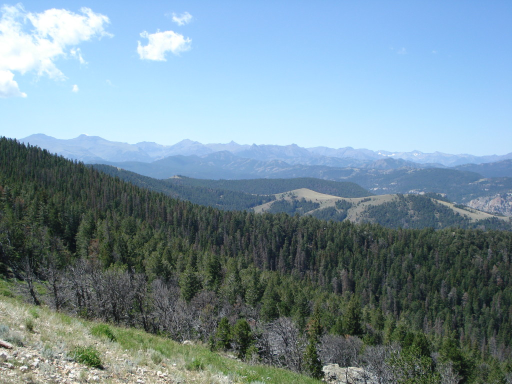 View of trees and mountains from Beartooth Pass