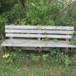 Bench in Afton Park
